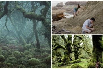 В США обнаружены останки древнейших лесов на Земле