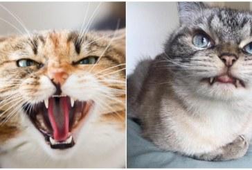Домашняя кошка два дня продержала жительницу Архангельска на кухне
