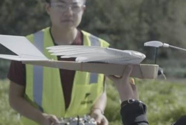 Американский робот PigeonBot дал ученым представление о работе крыльев птиц