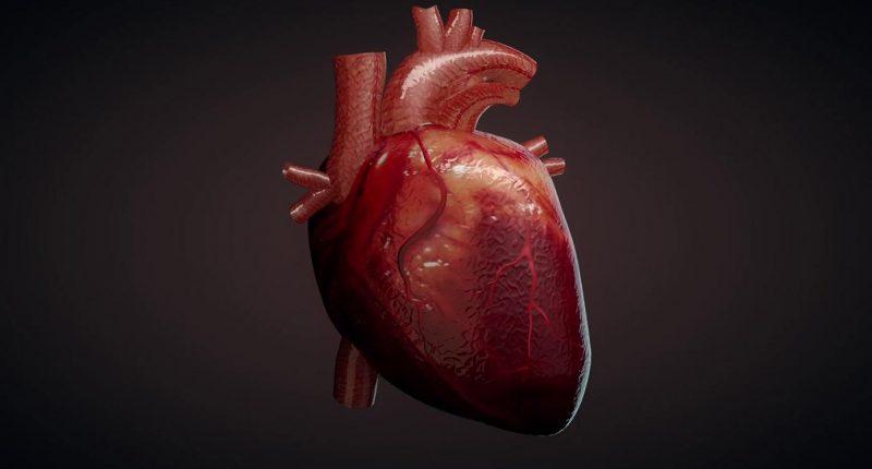 Из стволовых клеток удалось вырастить человеческое сердце