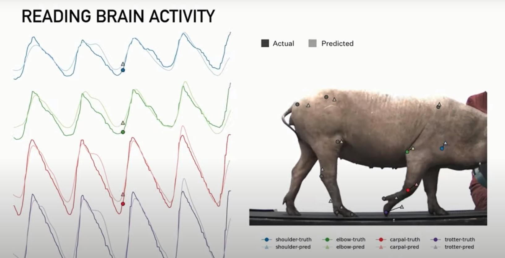 Илон Маск показал миру свинью с имплантированным в мозг чипом