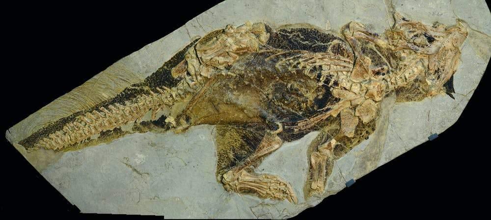 Ученые узнали, что динозавры для общения использовали клоаку