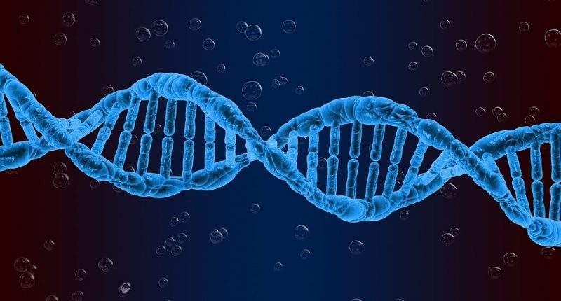 Учёные из Дубны разработали тест-систему для выявления «гена долголетия»